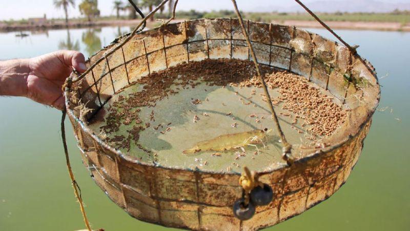 Acuacultura: el futuro de Baja California
