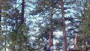 Reforestaci�n de Sierra de Ju�rez est� en riesgo