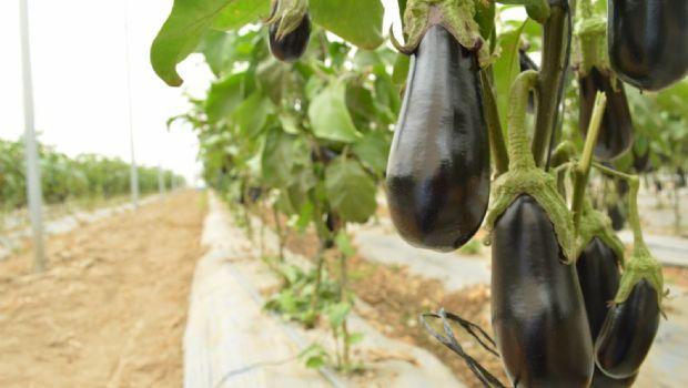 Invita Estado a conferencia sobre sanidad vegetal en la Zona Costa