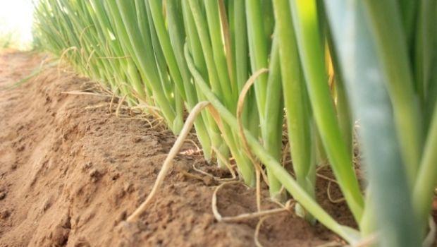 Impulsó Estado al sector agropecuario con créditos por 40 mdp durante 2017