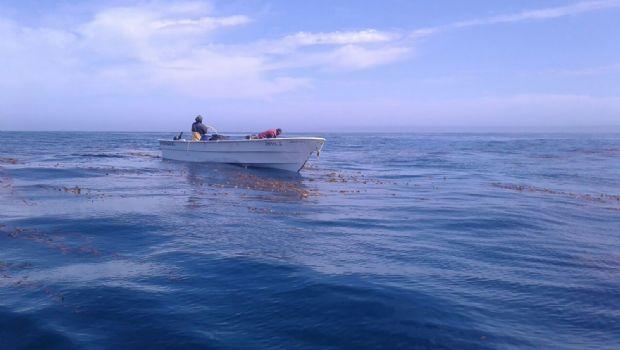 Alcalza BC el 8.2% en pesca