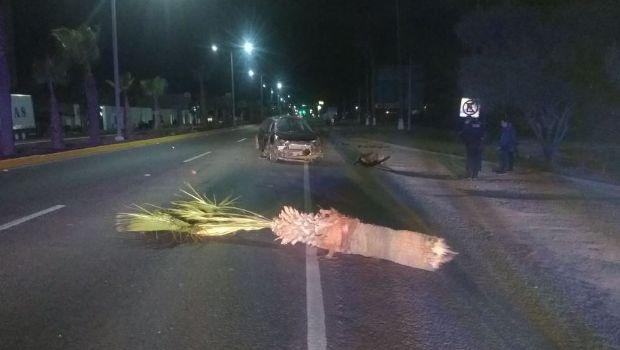 Automovilista se impacta contra dos palmeras en la Escénica