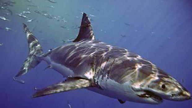 Termina temporada para ver tiburones