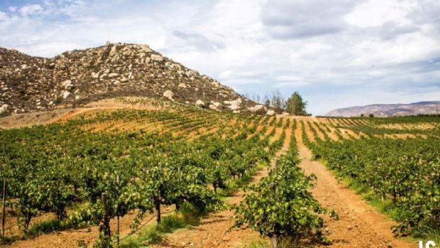 En proceso de regularización 180 vinícolas y restaurantes