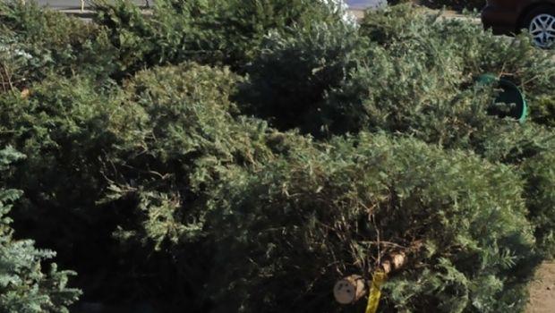 Lleve árboles navideños a los centros de acopio