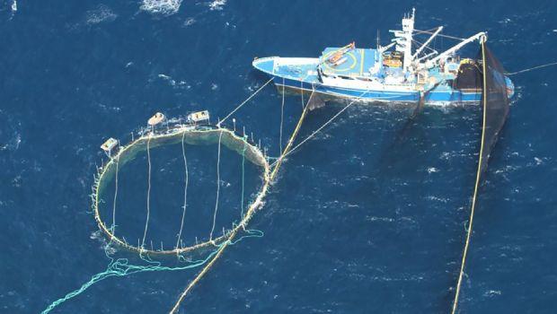 Castigará Conapesca  sobrecaptura de atún