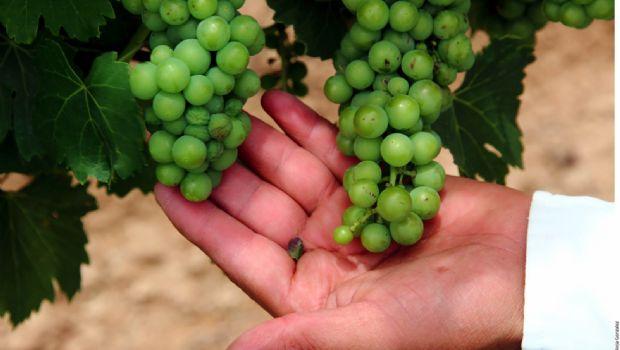 Traerá ley padrón de industria vitivinícola