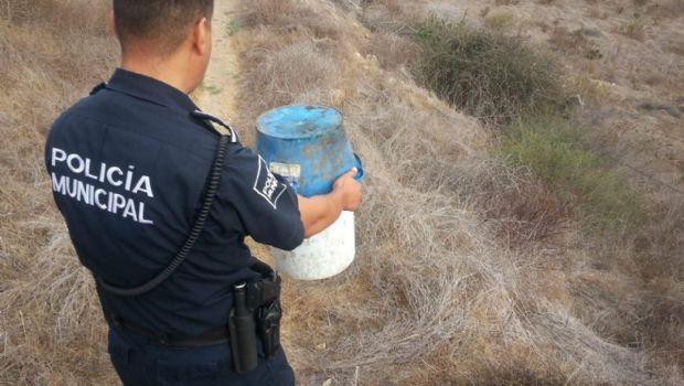 Retiran policías municipales una víbora de escuela en El Sauzal