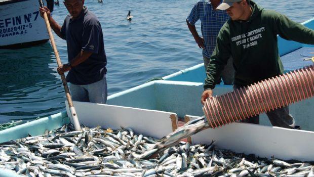 Interés de UE por sardina y langosta