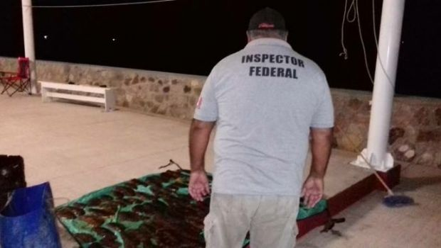 Caen traficantes de pepino de mar