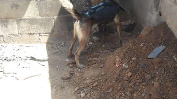 Localiza agente canino  a cadáver en una casa