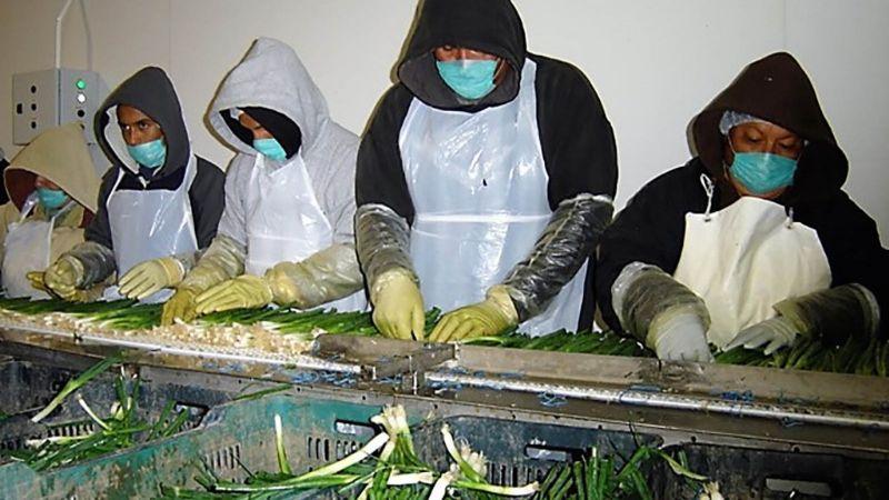 Convoca Sader a agroindustria