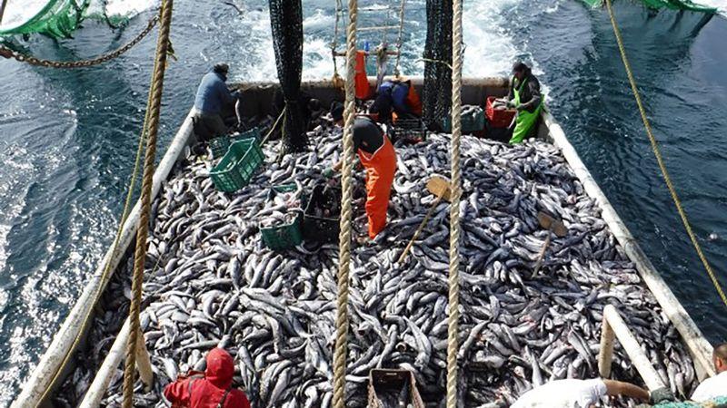 Aprovechan en México captura de la merluza