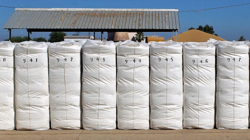 Avanza la cosecha algodonera 2020