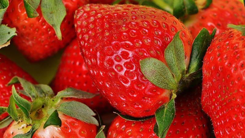 Fresa: el mayor cultivo en el sur